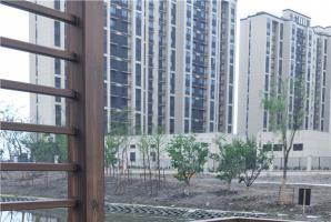 上海青浦区室外钢构廊架仿木纹施工案例